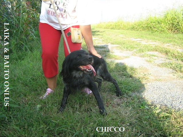 chicco3 19 9 09